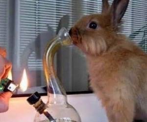 rabbit, bong, and bunny image