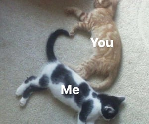 adorable, Best, and cats image