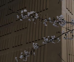 aesthetic, asia, and cherry tree image