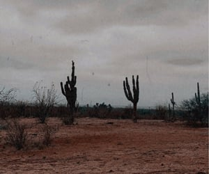 cactus, cloudy, and green image