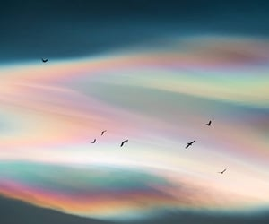 archive, birds, and sky image