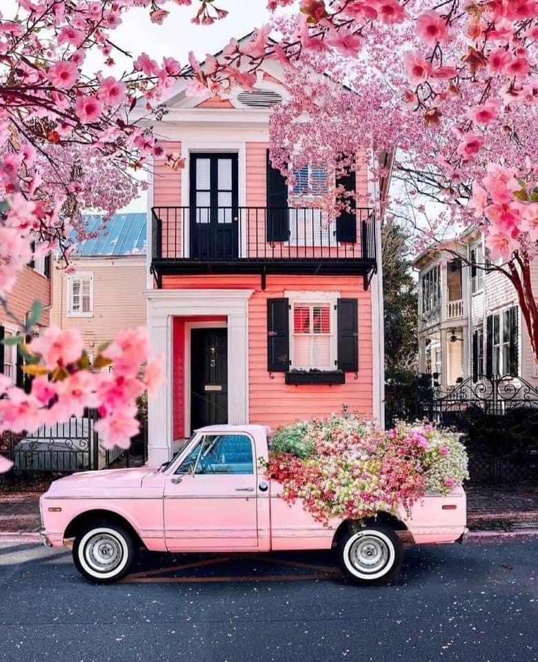 aesthetic, car, and flowers image