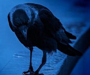 raven and bird image
