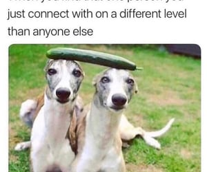connect, find, and haha image