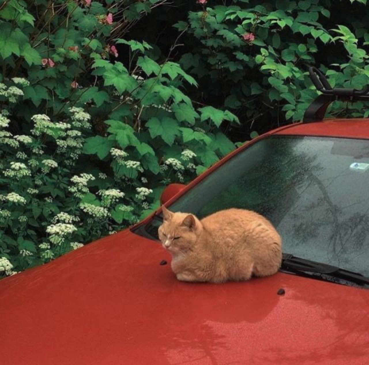 cat, aesthetic, and red image