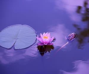 spirituality, numerology, and astrology image
