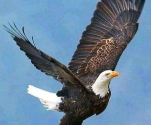 nature, bald, and bird image