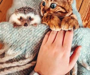 animals, bird, and cat image