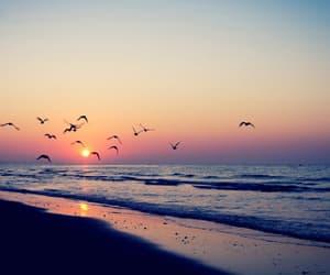 beach, bird, and sunset image