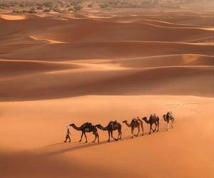 beautiful, Dubai, and famous image