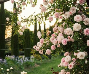 garden, flowers, and blossom image