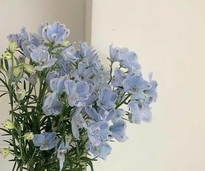 Blue flower 🌺🌸🌼