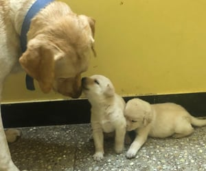 dogmom, happy, and puppies image