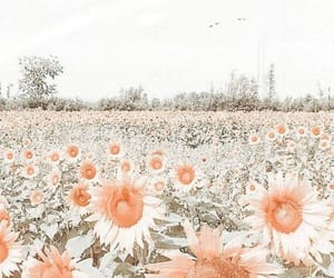aesthetic, beautiful, and spring image