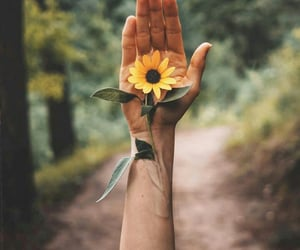 aesthetic, hand, and sunflower image