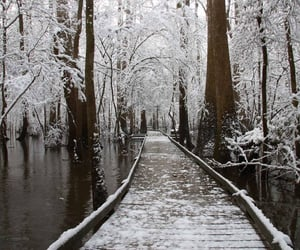 forest, parks, and snow image