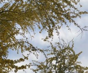 aesthetic, arizona, and bloom image