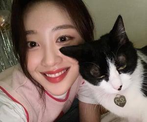 sooyoung cat