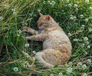 cat, nature, and flowers image