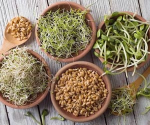 health, chia, and sprouts image