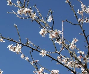 blue sky, spring, and bloom image