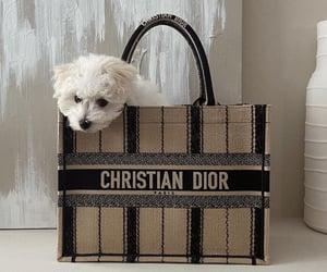 bag, dog, and dior image
