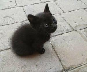 animal, small, and black image