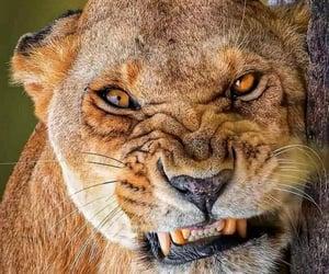 Animales, naturaleza, and furia image