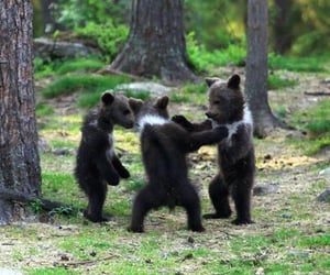 baby, bears, and nature image