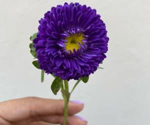 beautiful, marigold, and purple image