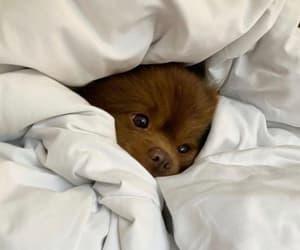 Lazy, puppy, and sleep image