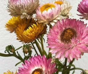 flower, beautiful, and marigold image
