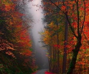 autumn, cold, and escape image
