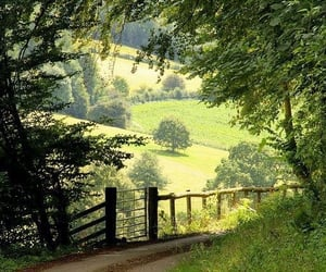 nature, green, and trees image