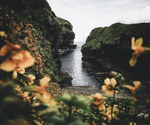 flowers, nature, and water image
