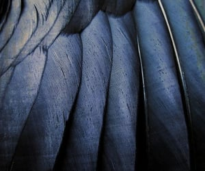 aesthetic, blue, and feather image