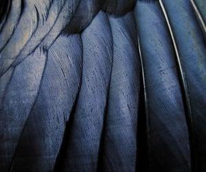 Aesthetic black wings