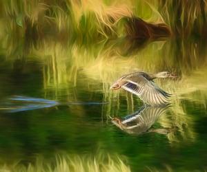 animal, bird, and estuary image