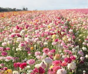 flowers and flower field image