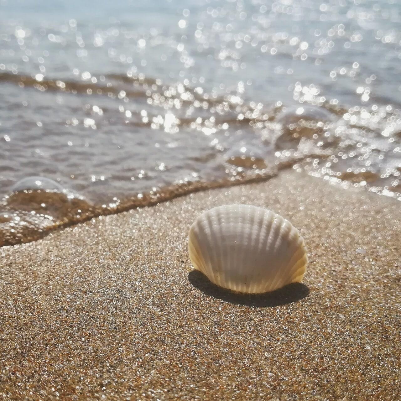 sealover, beautiful, and beach image