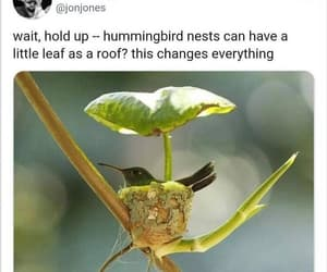 hummingbird crib image