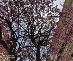 flowers, pink, and almond tree image