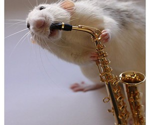 animal, mouse, and music image