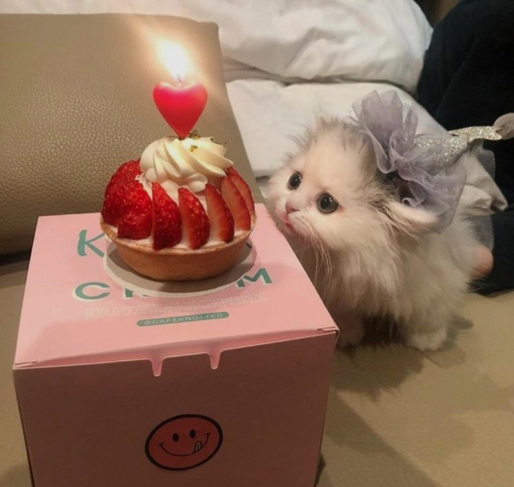 cat, cake, and kitty image