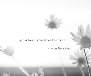 free spirit, butterflies rising, and poetry image