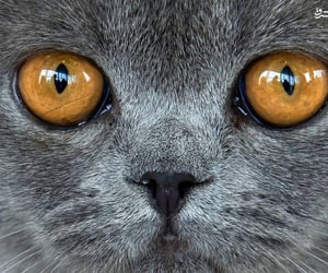 cat, close up, and eyes image