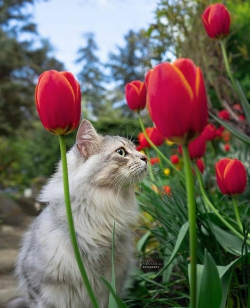 cat, chat, and flowers image