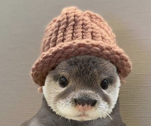 Adorable Otter ~