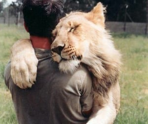 lion, hug, and animal image
