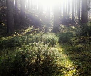 breath, forest, and hiking image